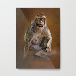 0000327 Barbary Macaque Gibraltar wih Textured Background 3035 Metal Print