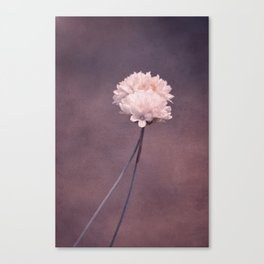fall in love I Canvas Print