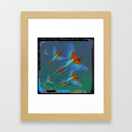 BLACK-TEAL SHABBY CHIC TROPICAL BLUE MACAWS Framed Art Print