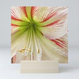 Amaryllis Hippeastrum flower Mini Art Print