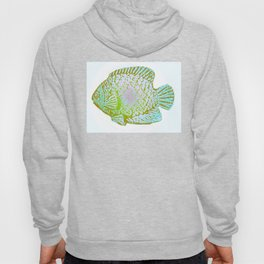 Sunfish Colors 3 Hoody