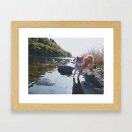 Shiba Inu At The River Framed Art Print
