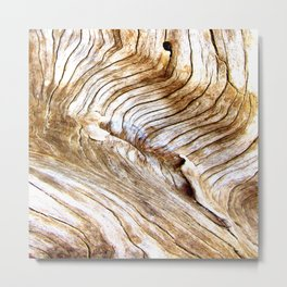 Organic design Tree Wood Grain Driftwood natures pattern Metal Print