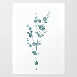 Minimal Eucalyptus Art Print