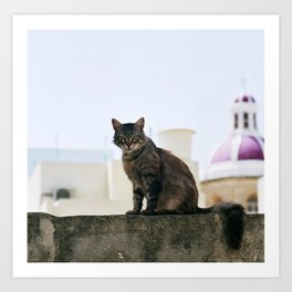 cat malta Art Print