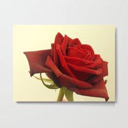 Rose Red Metal Print