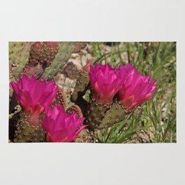 Beavertail Cactus in Bloom - II Rug