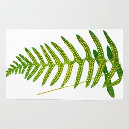 Antique Green Fern Print No.2 Botanial Art Rug