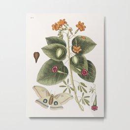 Great Moth (Phalna ingens) from The natural history of Carolina Florida and the Bahama Islands (1754 Metal Print