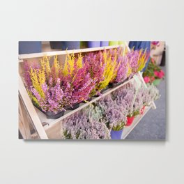 shelves with blooming heather Metal Print
