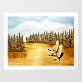 Canada geese on golden lake. Art Print