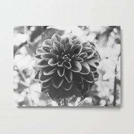 Noir Dahlia Metal Print