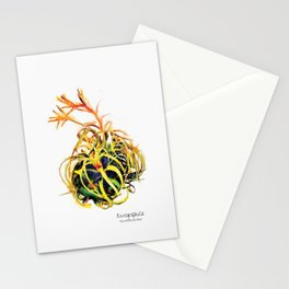 Tillandsia Xerographica Air Plant Watercolor Stationery Cards