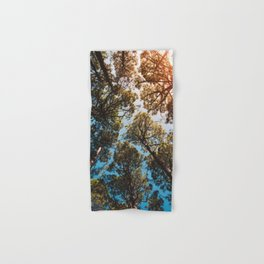 Trees and sky in sunlight- forest landscape - nature photography Hand & Bath Towel
