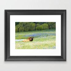Horses & Bluebonnets Framed Art Print
