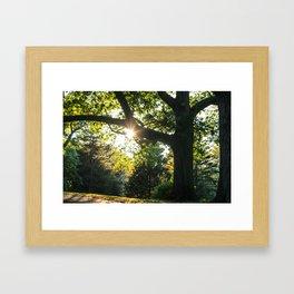 Park Sunset Framed Art Print