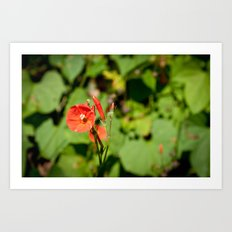 Last of the Summer Flowers Art Print