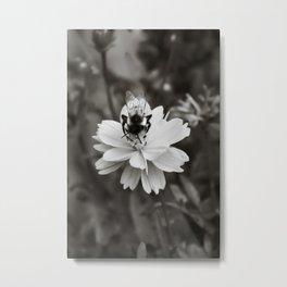 Bee on Cosmos Flower in Tintype Metal Print