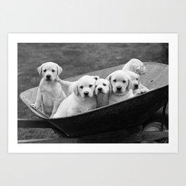 Labs Puppies In A Wheelbarrow Art Print