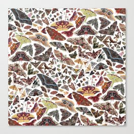 Moths of North America Pattern Canvas Print