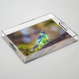 Mallee Ringneck Parrot Acrylic Tray