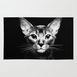 Abyssinian Cat Gray