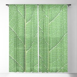 Green Vein Life Sheer Curtain