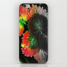 Fall in Summer iPhone & iPod Skin