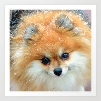 pomeranian Art Prints featuring Pomeranian  by Julie Rawlings