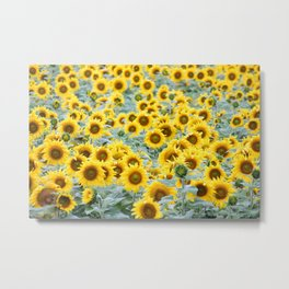Field of Sunflower Yellow Metal Print