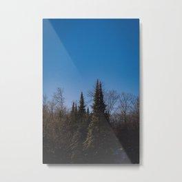 Trees in Muskoka Metal Print