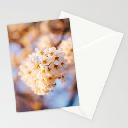 Photo of spring cherry blossom flowers during golden hour sunrise in Almere, Japanese Sakura trees in the Netherlands | Fine Art Colorful Travel Photography | Stationery Cards