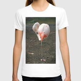 Chilean Flamingo T-shirt