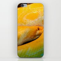 monty python iPhone & iPod Skins featuring Albino Python by GardenGnomePhotography