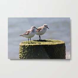 2 birds 1 pole Metal Print