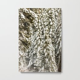 Snowy Trees Photography Print Metal Print