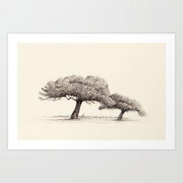 Pine Trees at Buskett, Malta Art Print