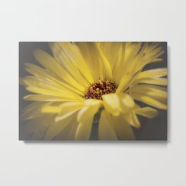 Yellow Calendula Metal Print