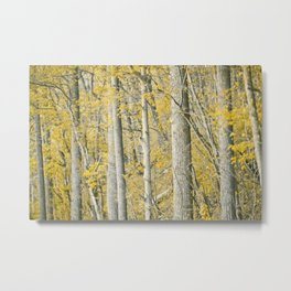 Amber Forest Metal Print