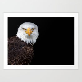 White Head Eagle with black background Art Print