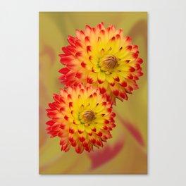 Dahlia Abstract Canvas Print
