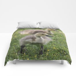 Cute and Fluffy Comforters