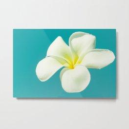 pua melia pakahikahi : flowers in the sky Metal Print