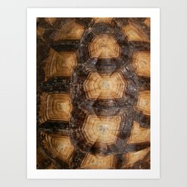 Shell Game Art Print