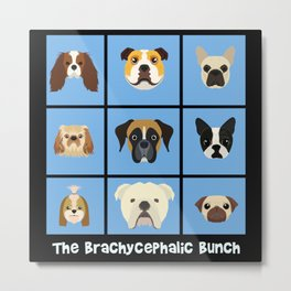 The Brachycphalic Bunch Metal Print