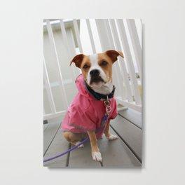Dog in Raincoat Metal Print
