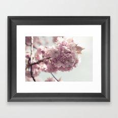 Spring's arrival: Cherry blossoms Framed Art Print