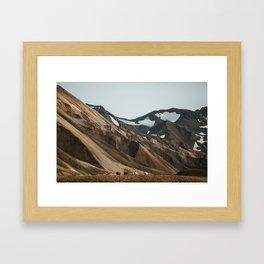 Sheep in Landmannalaugar, Iceland Framed Art Print
