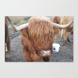 Wee Highland Coo Canvas Print