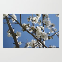 Cherry Blossom Branches Against Blue Sky Rug